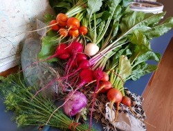 An August harvest ready to head to the Food Bank.