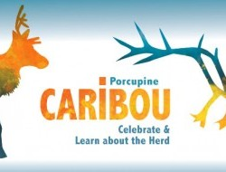 Porcupine Caribou: Celebrate and learn about the herd photo